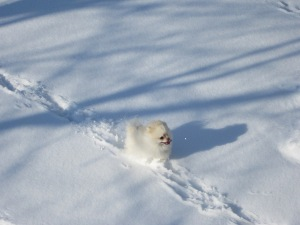 Shimar in snow 5