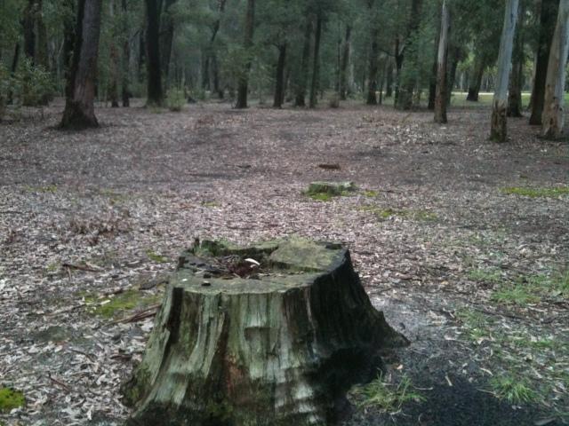 stump_by_abstractmatter-d5c3key